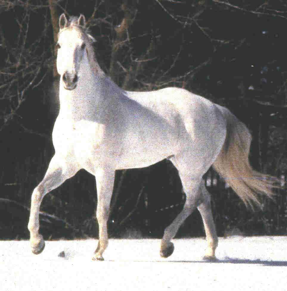 http://heavenawaits.files.wordpress.com/2008/09/horse-white-1.jpg