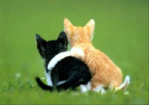 cats-friendship