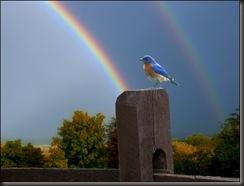 blue bird rainbow