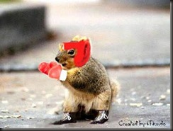 boxing-squirrel