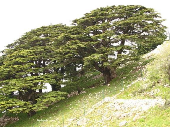 Garden Of Eden And The Trees Of Lebanon Heaven Awaits