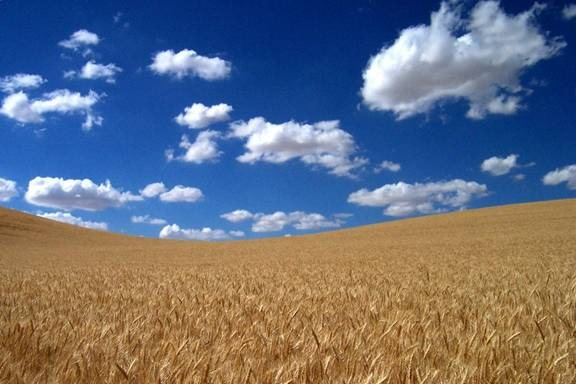Three Men In A Wheat Field Heaven Awaits