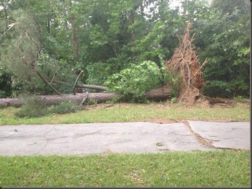 storm tree 2