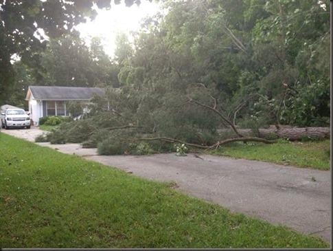 storm tree down